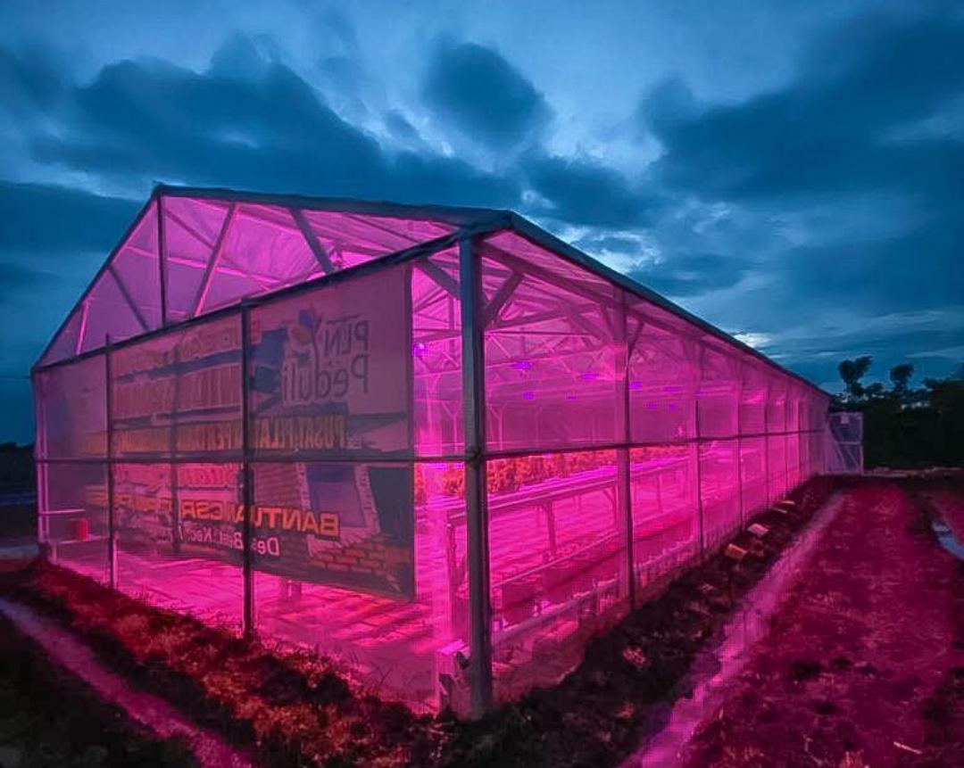 Sinar Lampu UV Terbukti Tingkatkan Produktivitas Hidroponik