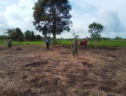 Dampingi Petani, Babinsa Kabawo Turun ke Sawah