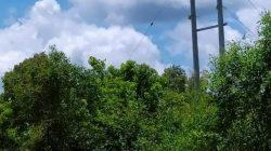 Desa Bumi Pratama Mandira, Kecamatan Sungai Menang, Ogan Komering Ilir, Sumatera Selatan (BPM OKI) kini telah teraliri listrik.