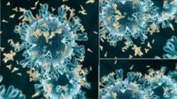 Kenali Gejala Virus B1617 Asal India