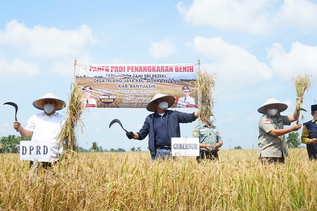 Gubernur Sumatera Selatan (Sumsel) H Herman Deru bersama masyarakat melakukan panen raya padi IP 200 di lahan penangkaran benih kelompok tani Sri Rezeki di Desa Telang Jaya Kecamatan Muara Telang, Kabupaten Banyuasin, Selasa (1/6).