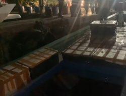 Benih Lobster Senilai Rp11 Miliar Dilepas di Pulau Kubur