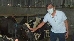 Program kemitraan dan digitalisasi pacu produktivitas industri olahan susu