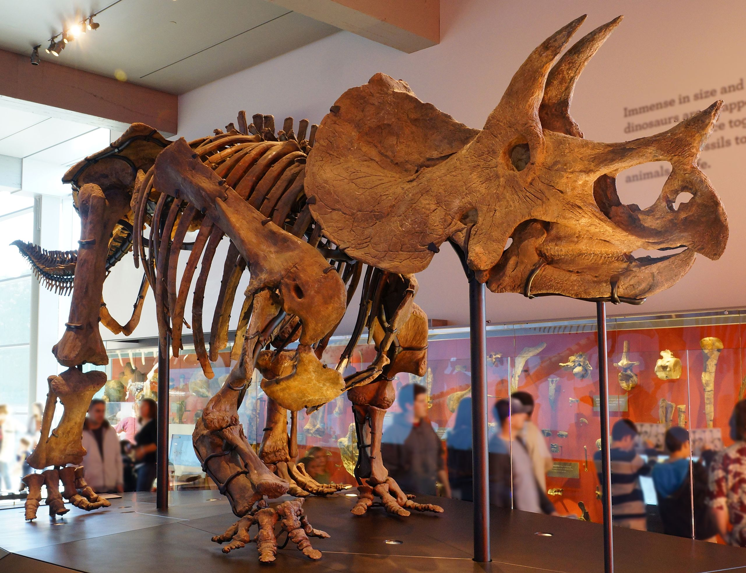 Triceratops - Source: Wikimedia.org